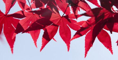 Playlist de l'automne : pour regarder les feuilles tomber
