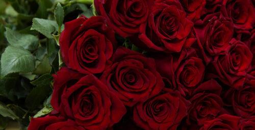 Enfin une playlist de Saint Valentin pour TOUS